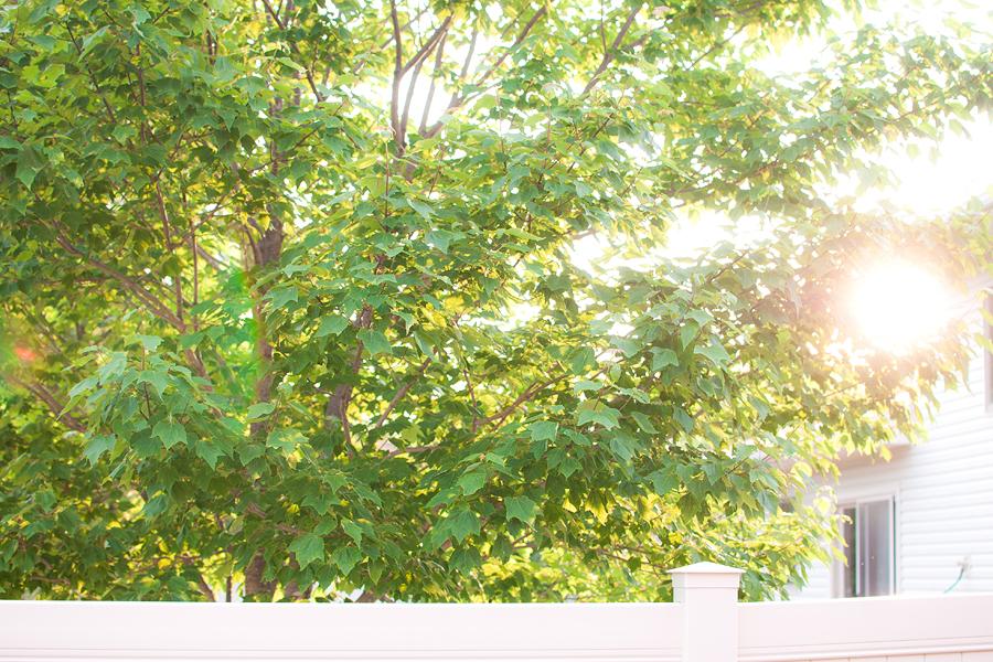 backyard308.jpg