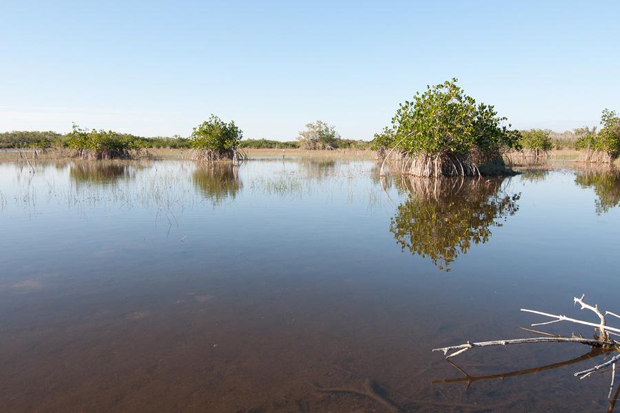 Everglades11.jpg