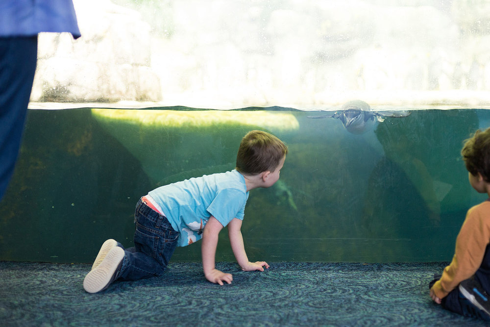 Exploring Houston with Kids | Moody Gardens Aquarium