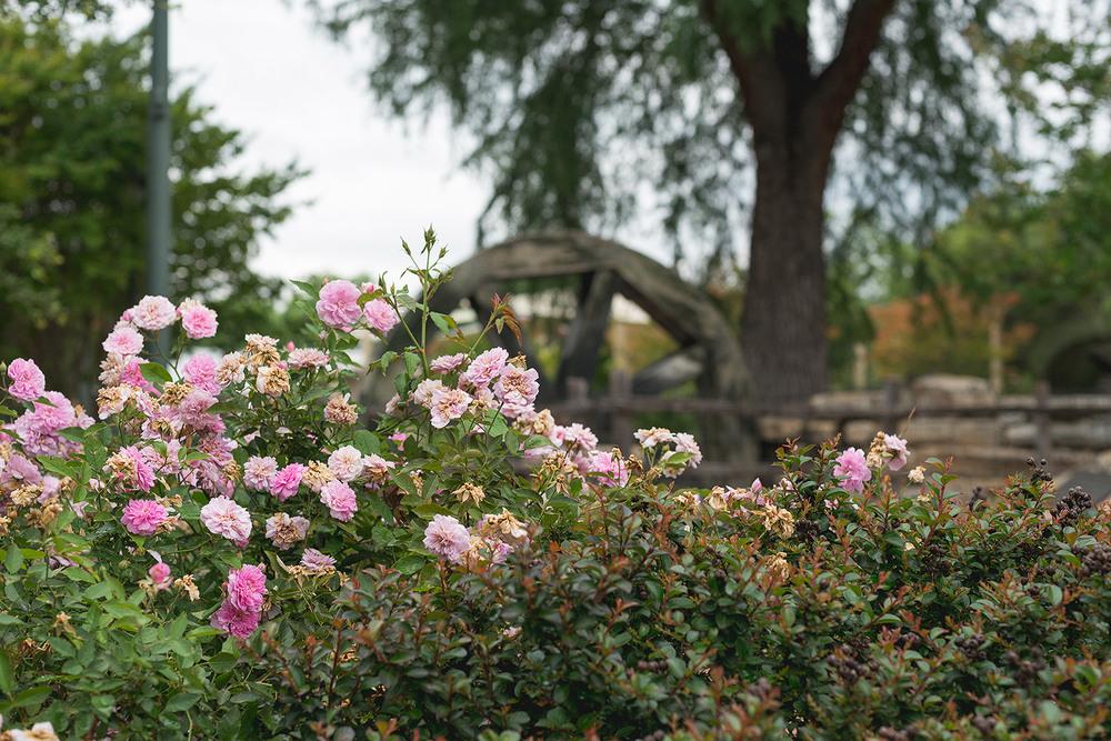 donya-luana-magnolia-tx-photographer-camping-in-fredericksburg-27.jpg