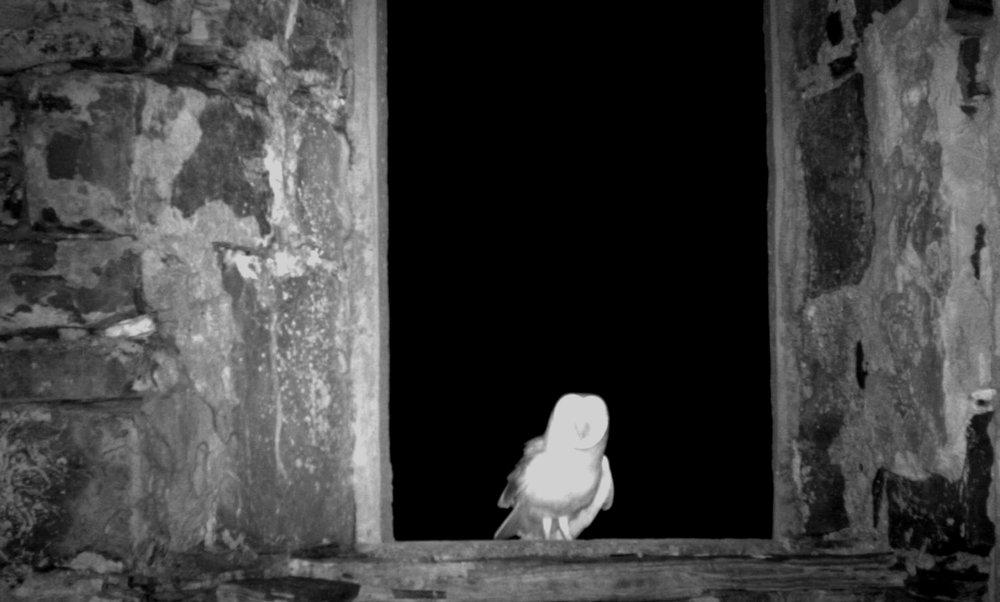 Barn Owl Assessment