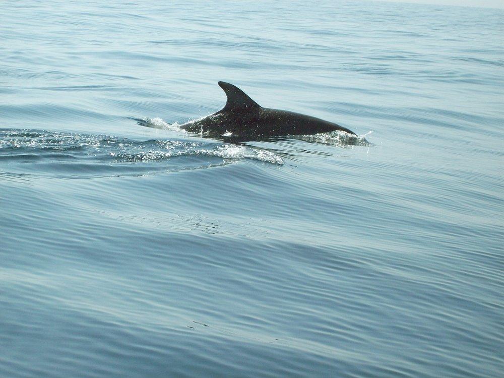 Nevis Dolphin Marine Highland