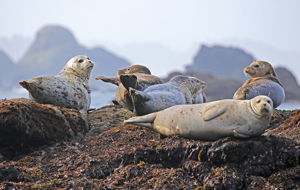 Nevis Marine Mammal Observer