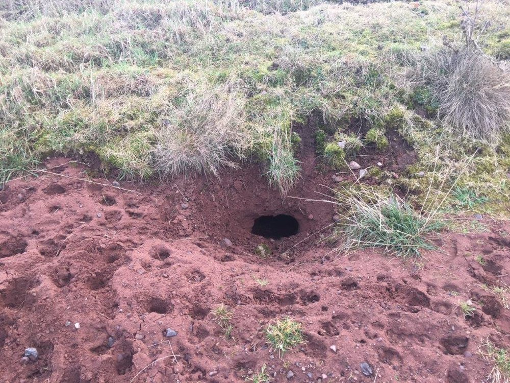 An active badger sett, just one of the many signs that our ecologists are looking for on your development site.