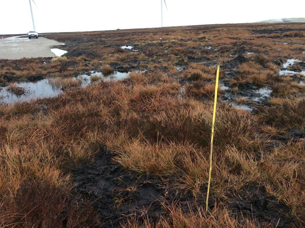 Ovenden Moor marking out bog restoration.JPG