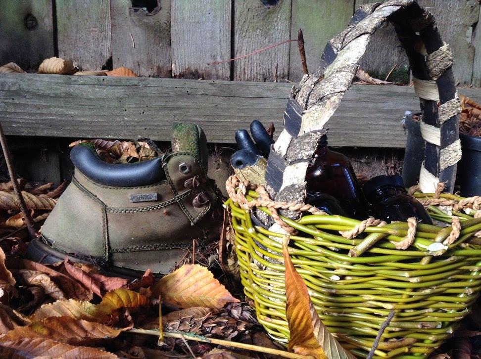 Willow (Salix Babylonica) and ask bark - Oregon, USA