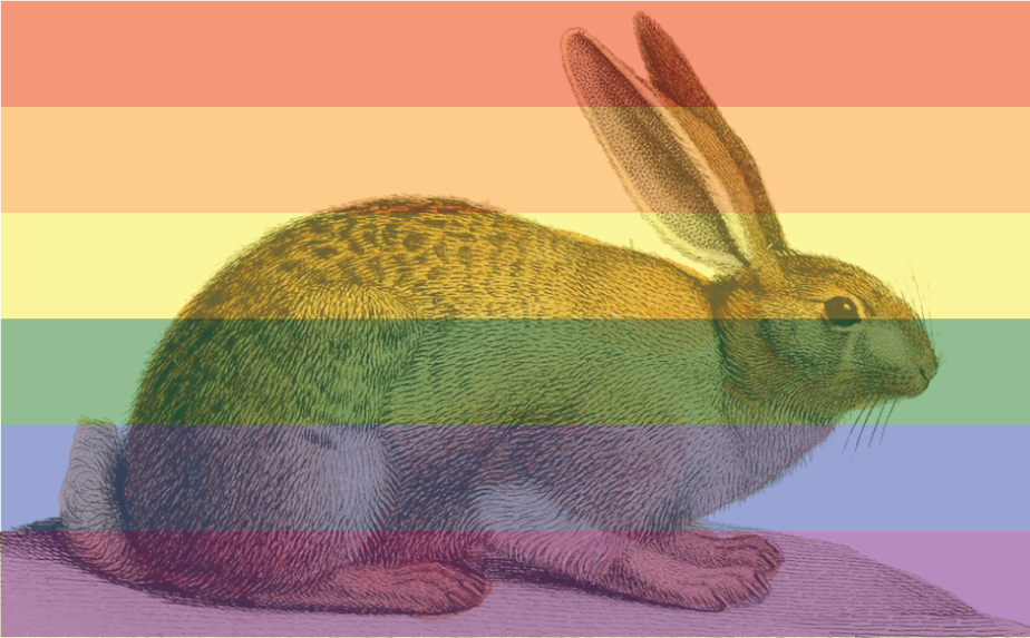 cover39_rainbowrabbit_c2015_agray.png