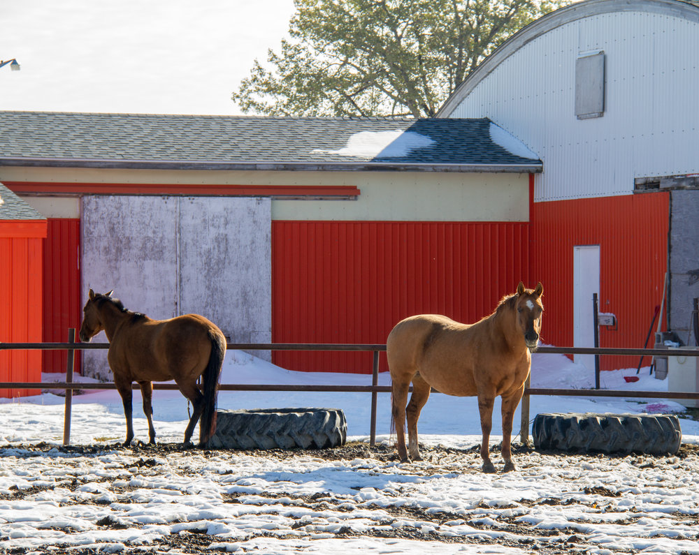 Some horses enjoying the sunshine after our October snowstorm.