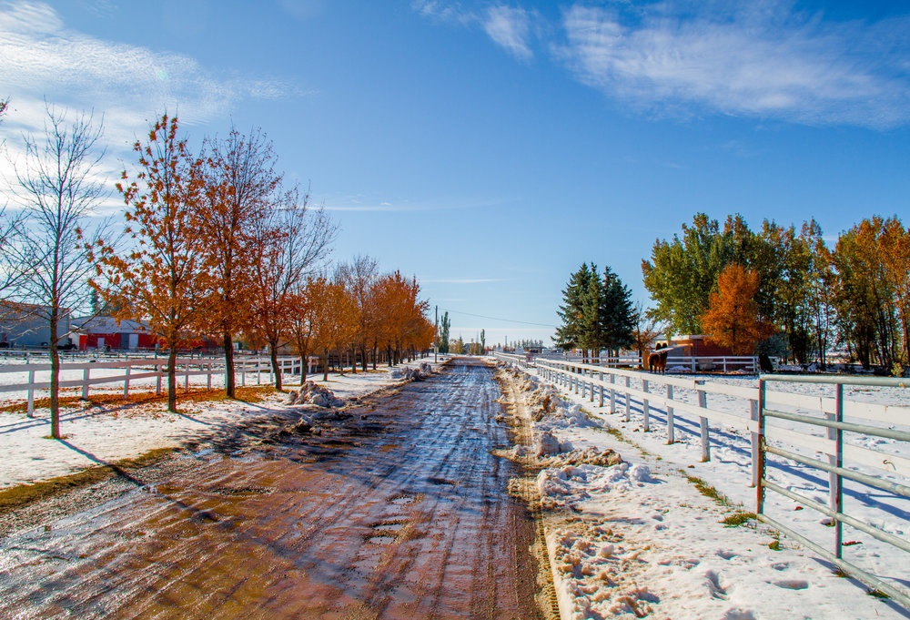 The LTRA driveway. A mix of fall and winter.