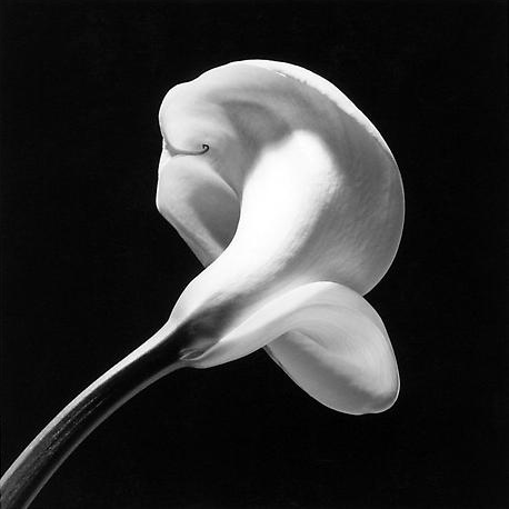 mapplethorpe6.png