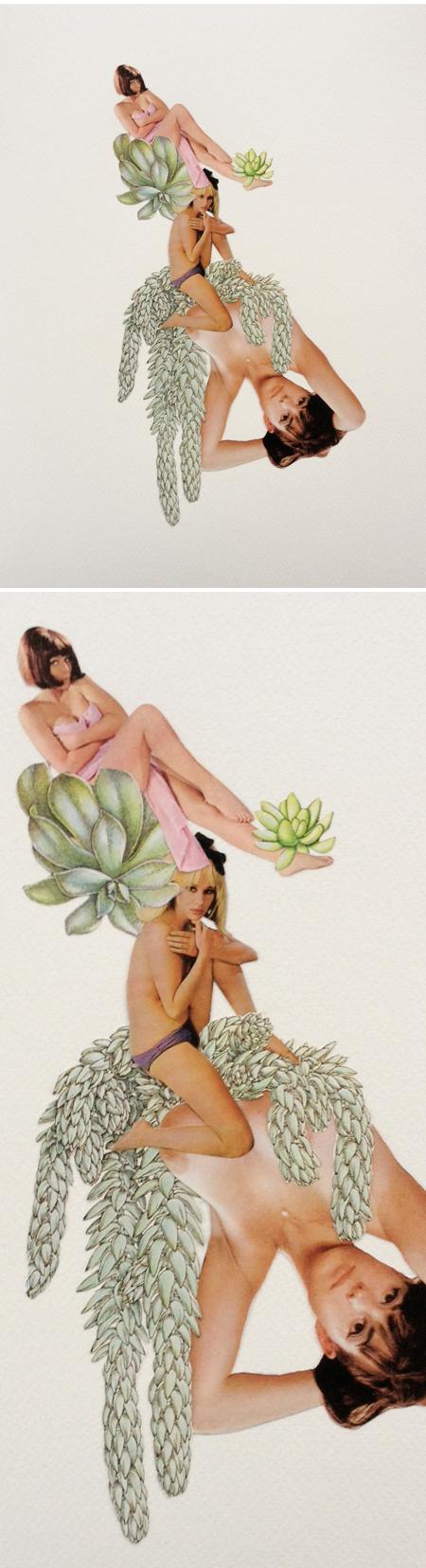 dirtygarden_succulent1