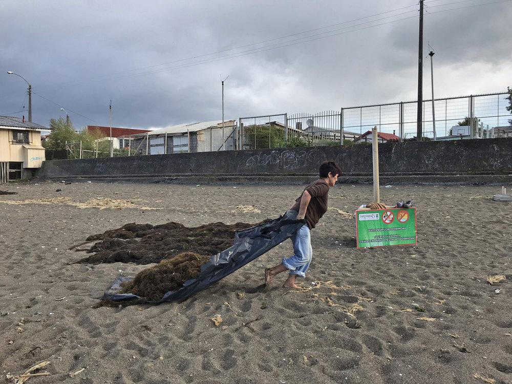 Kelp Collector 1.jpg