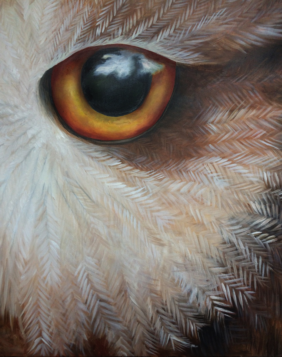 Owl Eye Detail