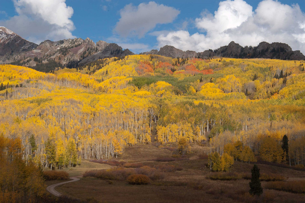 Jeff Foster  |   Foliage Update: gunnisoncrestedbutte.com