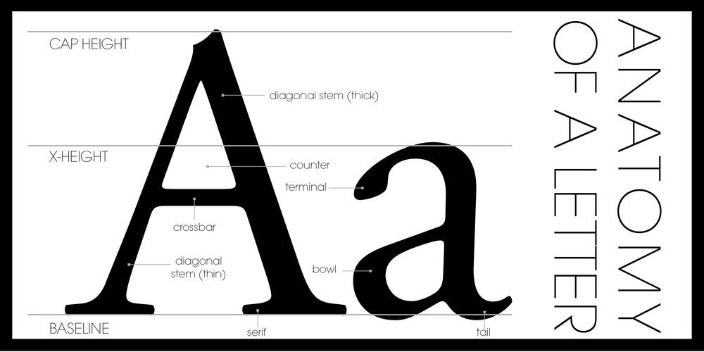IP_ANATOMY OF A LETTER_4 X 8.jpg