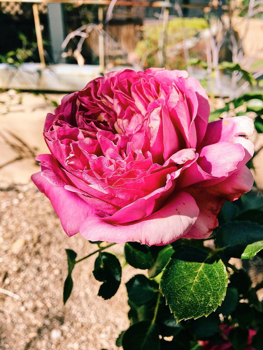 nature_flower2.jpg
