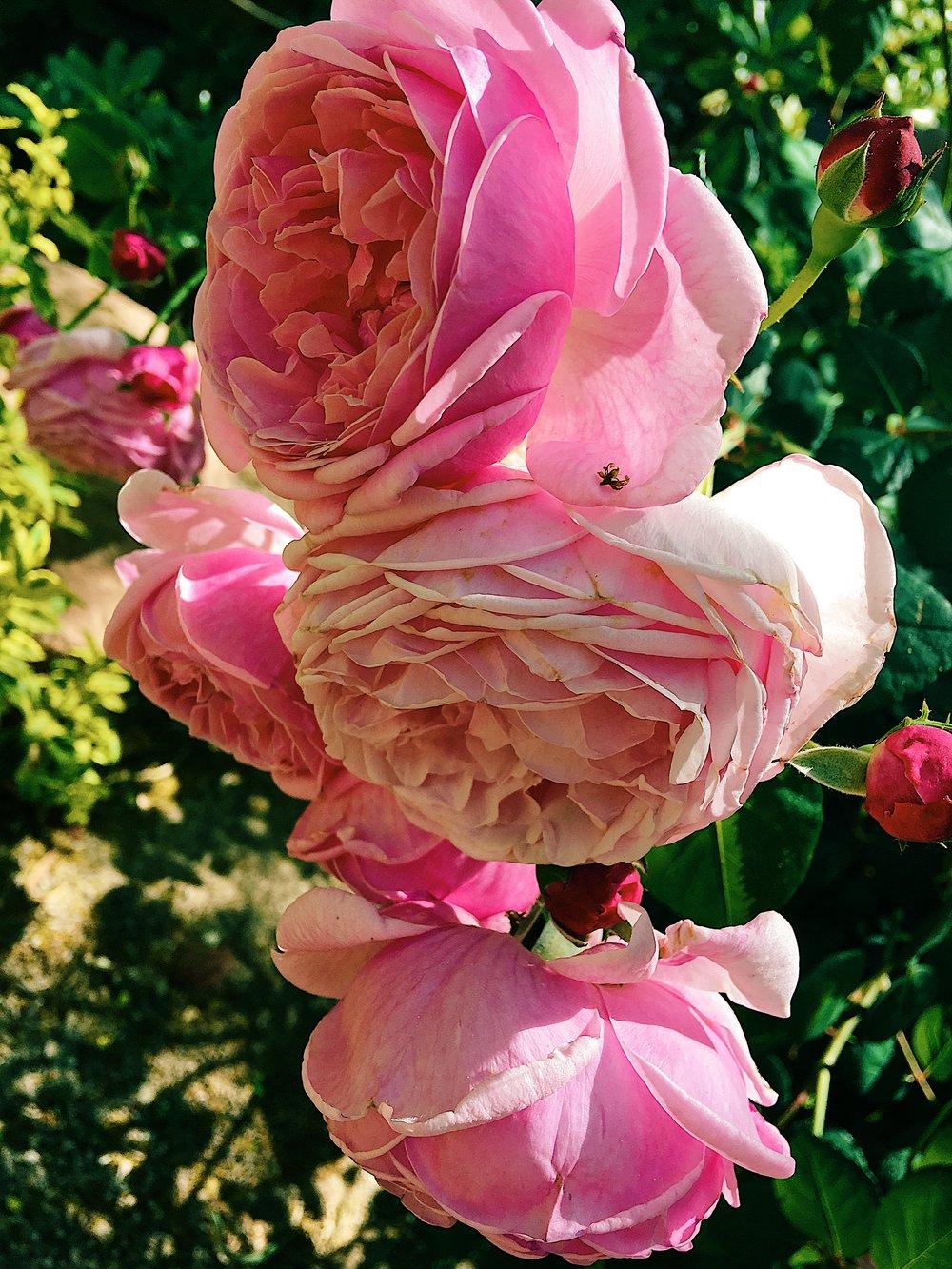 nature_flower3.jpg