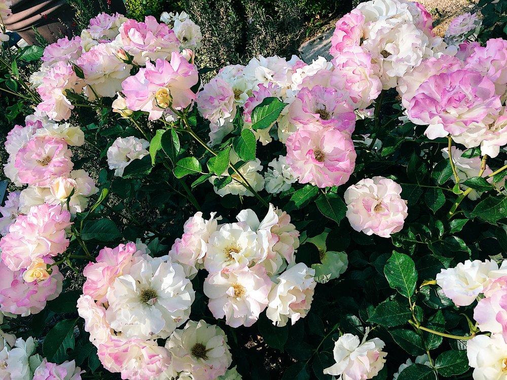 nature_flowers.jpg