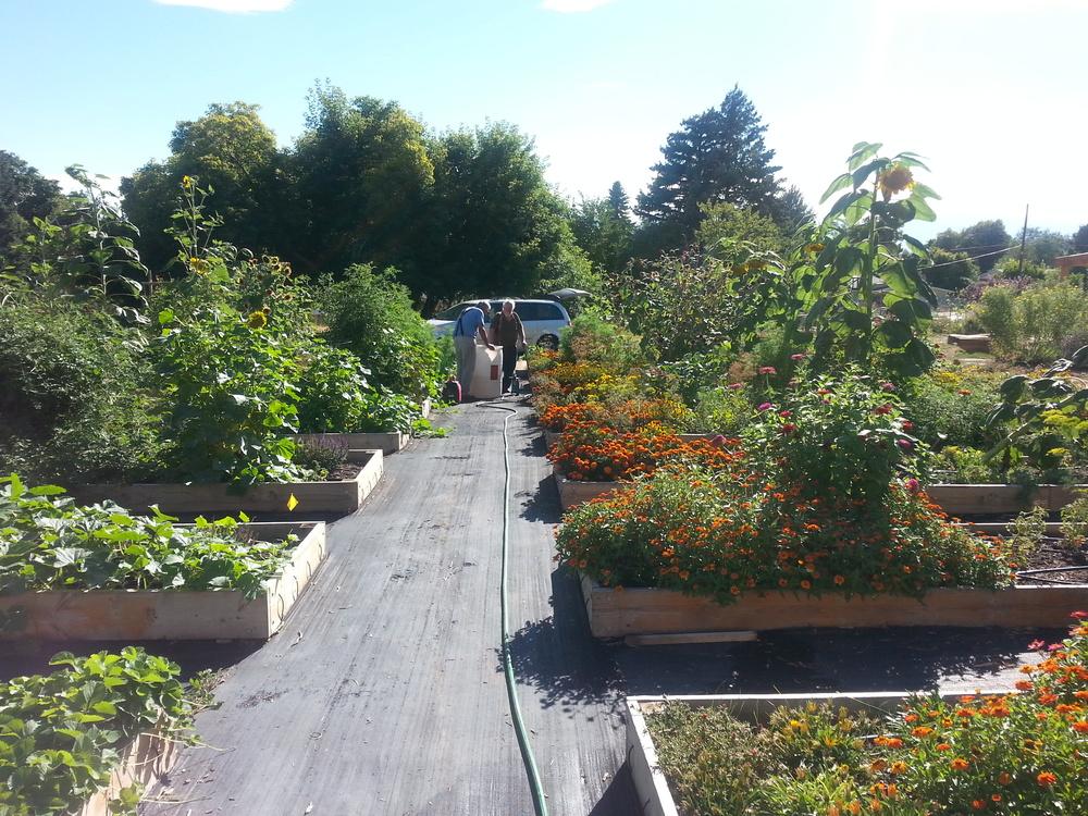 Olympus Gardens2.jpg