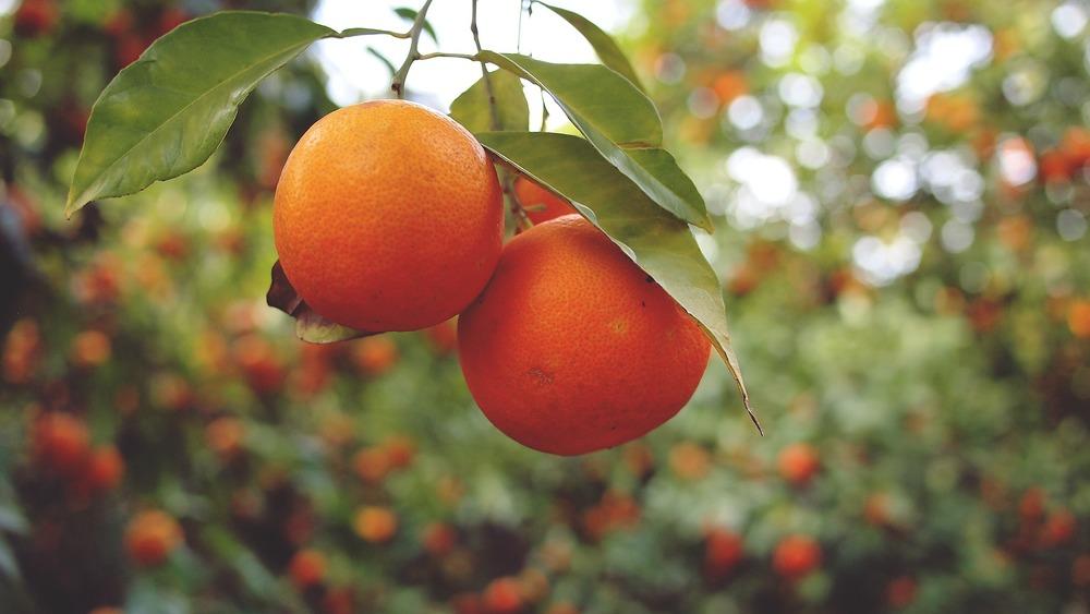 oranges-926274_1920.jpg