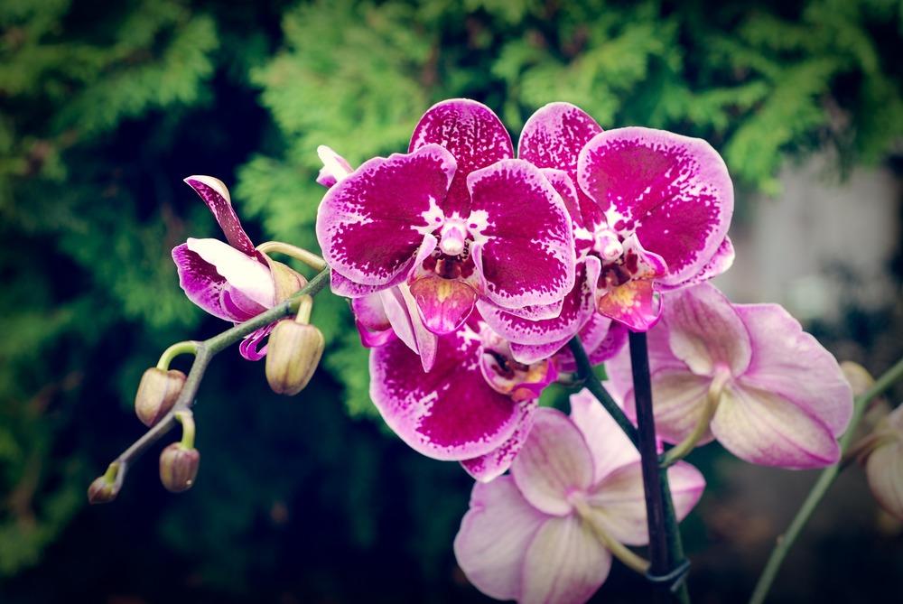 orchid-630969_1920.jpg