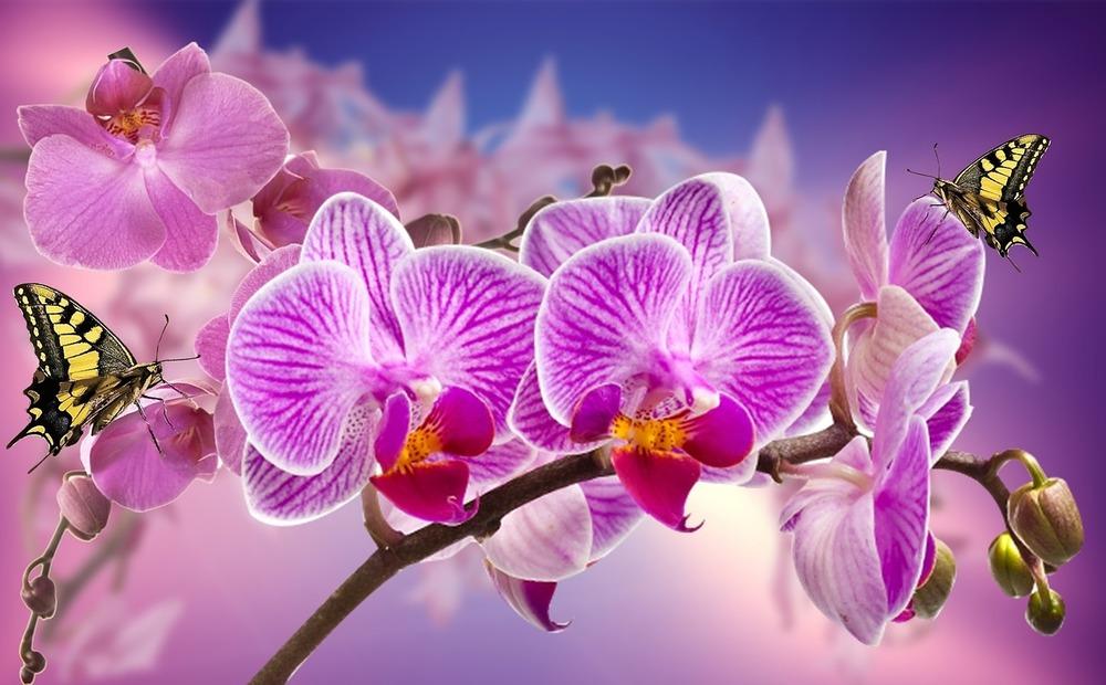 orchids-866594_1280.jpg