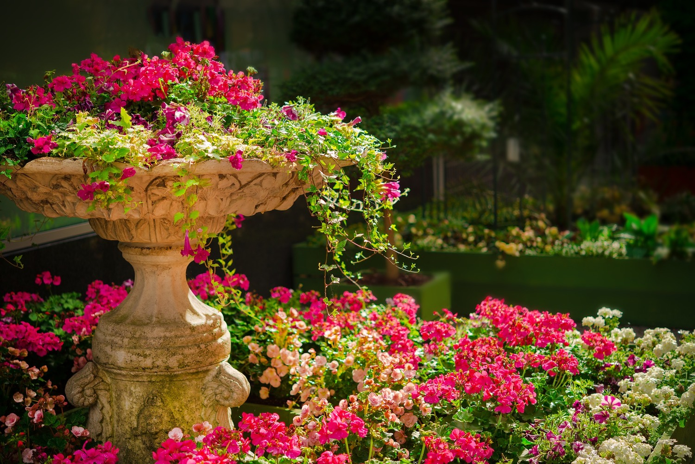 Turboganic My Garden – What Should I Plant in My Garden