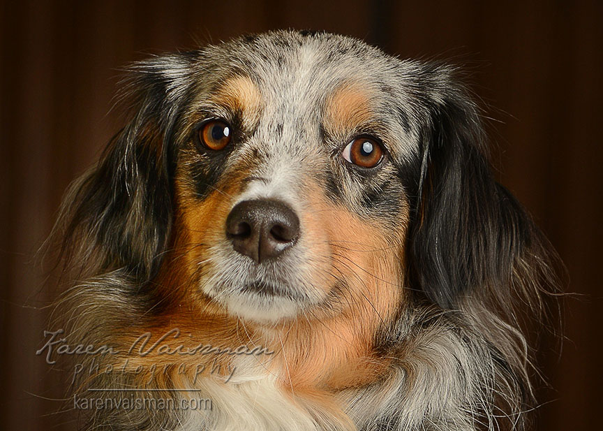 Does Your Dog Look at You Knowingly? Capture the Moment with Karen Vaisman Photography (818) 991-7787 - Westlake Village
