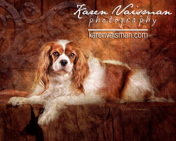 Regal Pet Portraits by Karen Vaisman Photography - Westlake Village - (818) 991-7787