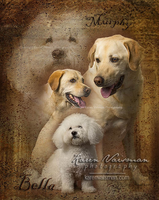 Custom Pet Portrait Art - Karen Vaisman Photography (818) 991-7787 - Calabasas - Lake Sherwood - Hidden Hills - Westlake Village CA