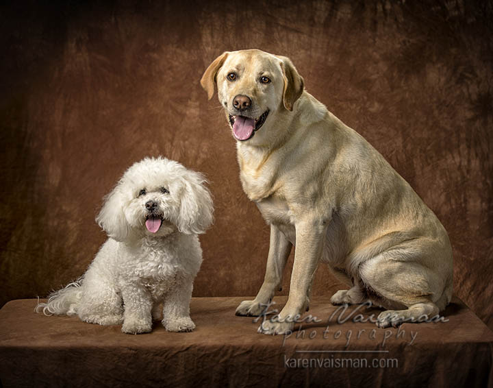Dog Portraiture - Camarillo - Woodland Hills - Calabasas - Karen Vaisman Photography (818) 991-7787