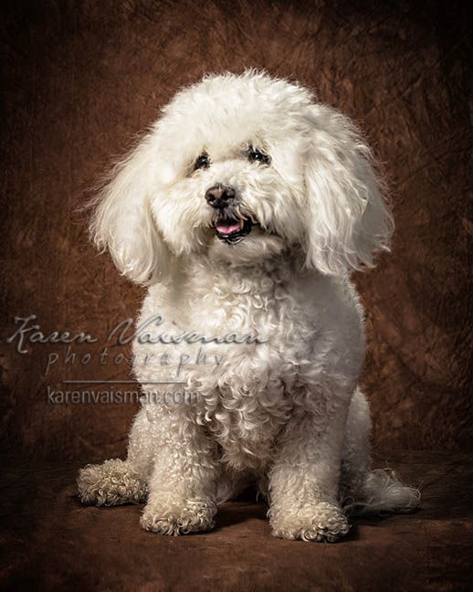 Furry Friends Fotos! Karen Vaisman Photography (818) 991-7787 Agoura - Thousand Oaks - Calabasas - Malibu - West Hills California