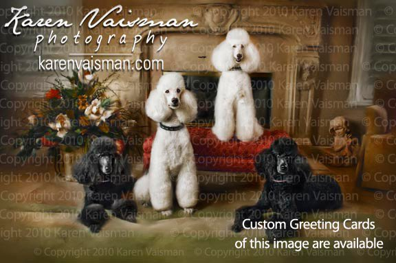 Regal Poodle Portraits (818) 991-7787 - Capture the Memory of your Treasured Pet with Karen Vaisman Photography - Woodland Hills, West Hills, Calabasas, Los Angeles