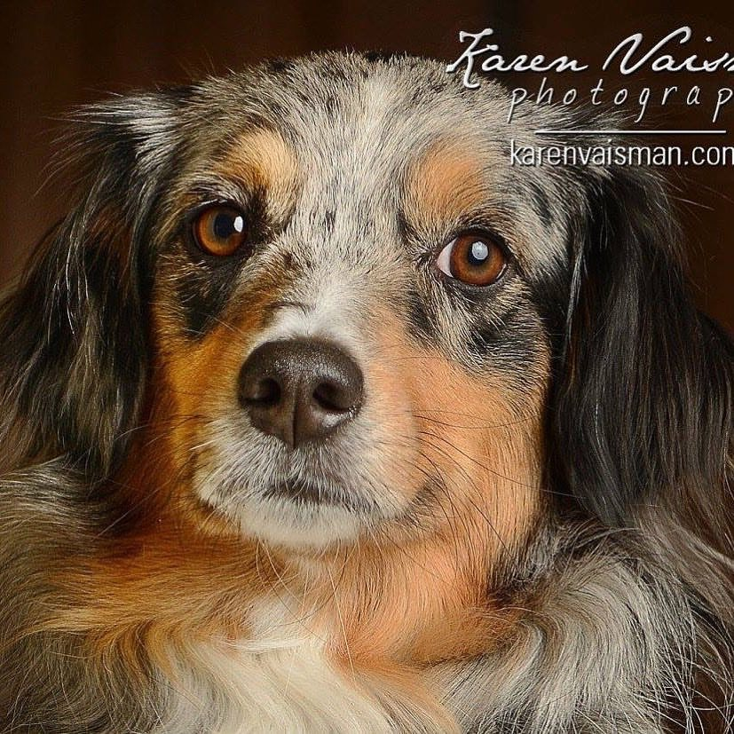 Dog - Pet - Horse Photography Galleries - See More Galleries - Menu At Top of Screen
