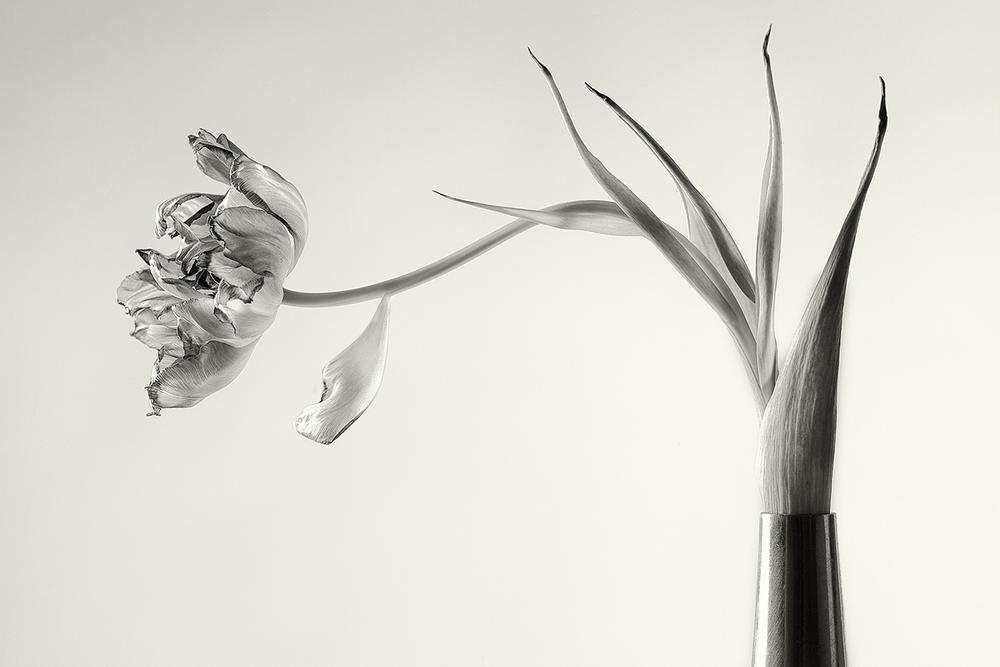 Tulipation