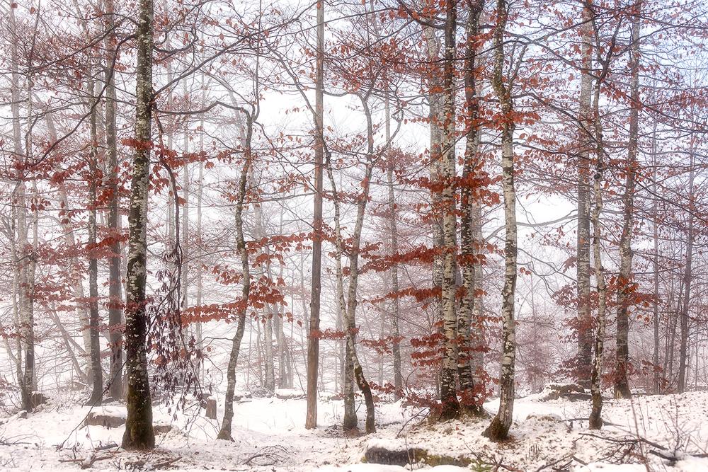 Erster Schnee 2016