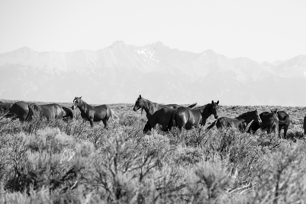 Taos_2016_10.jpg