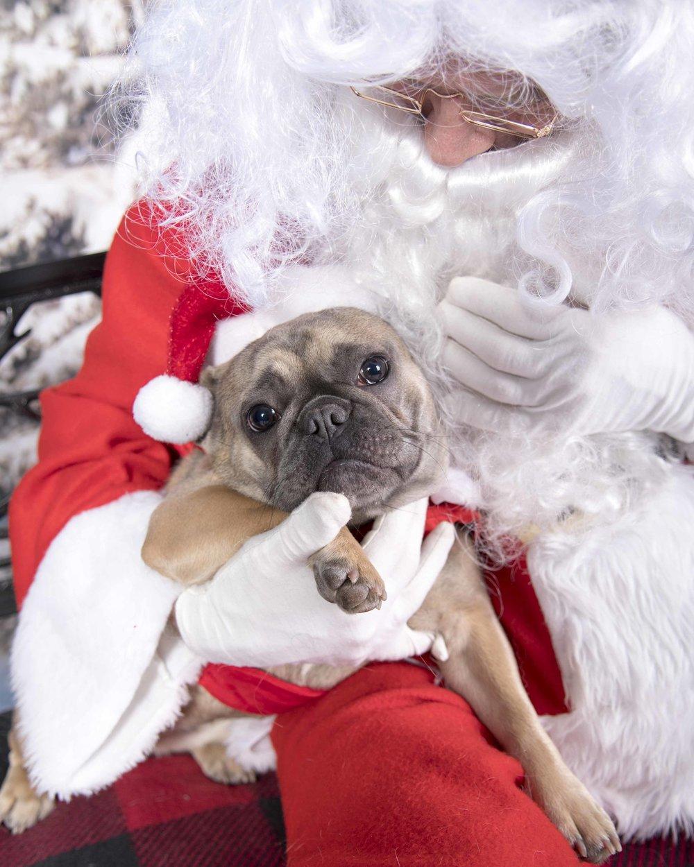 Pet_Santa_12_10_2017_06.jpg