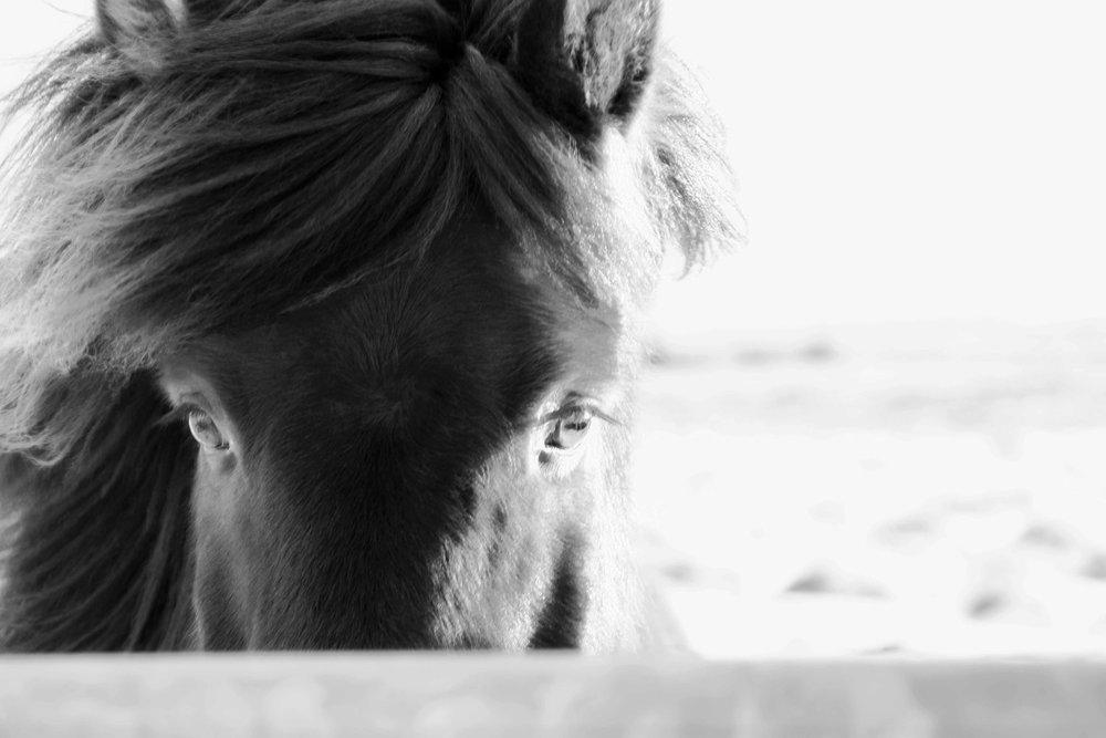 Iceland_Horses_11232017_07.jpg