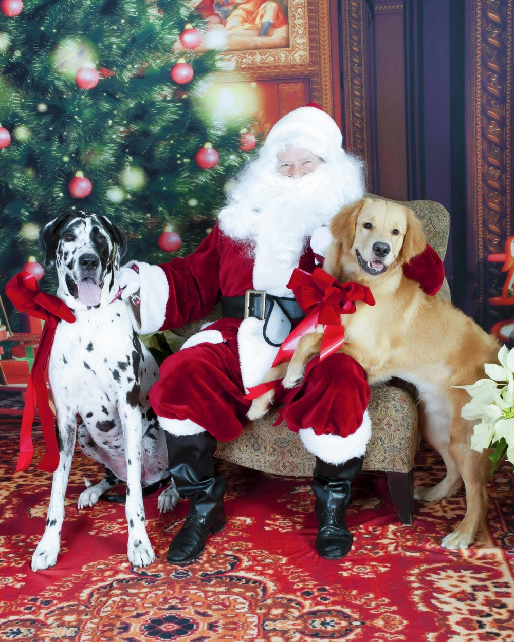 2 Big Dogs with Santa