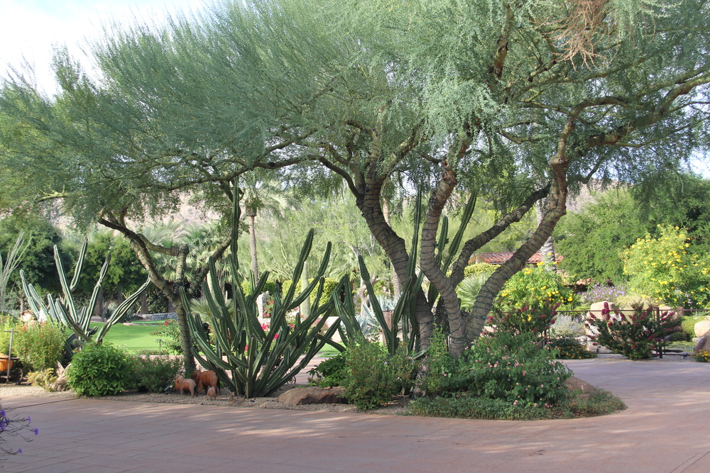 cornerstone-landscaping-desert-arizona.JPG