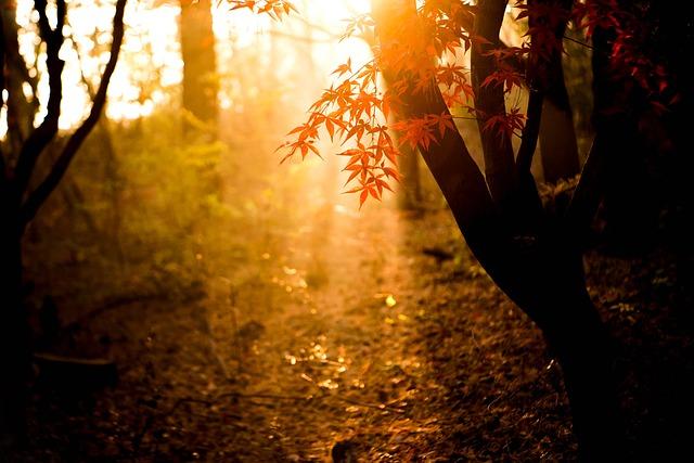 autumn-2976418_640.jpg