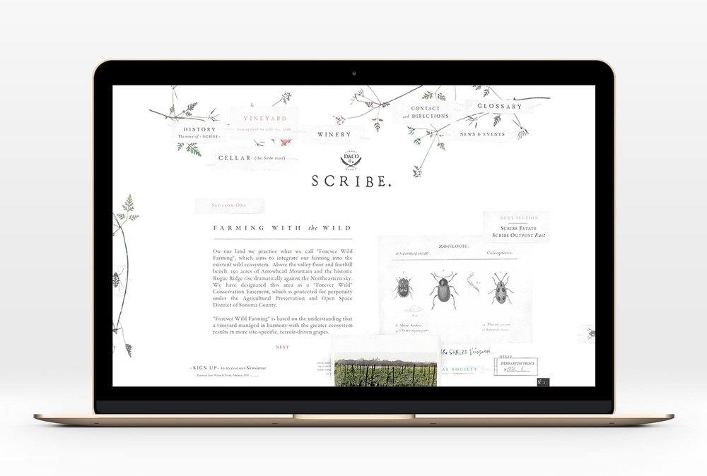 Scribe-Website-01.jpg