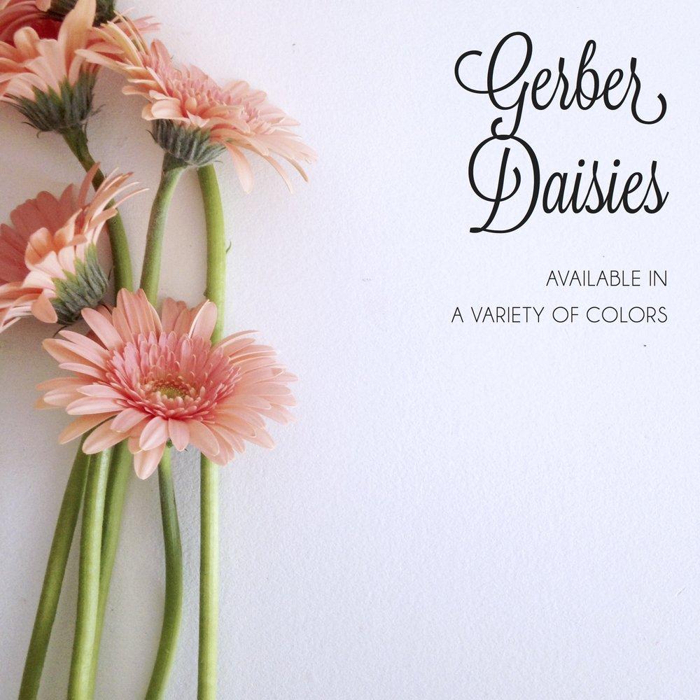 FLORAL-gerber daisies2.jpg
