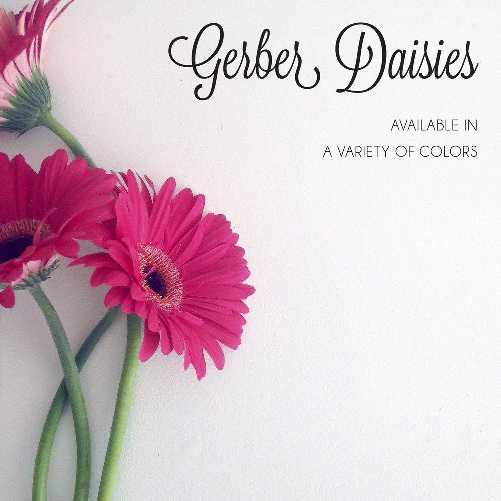 FLORAL-gerber daisies.jpg