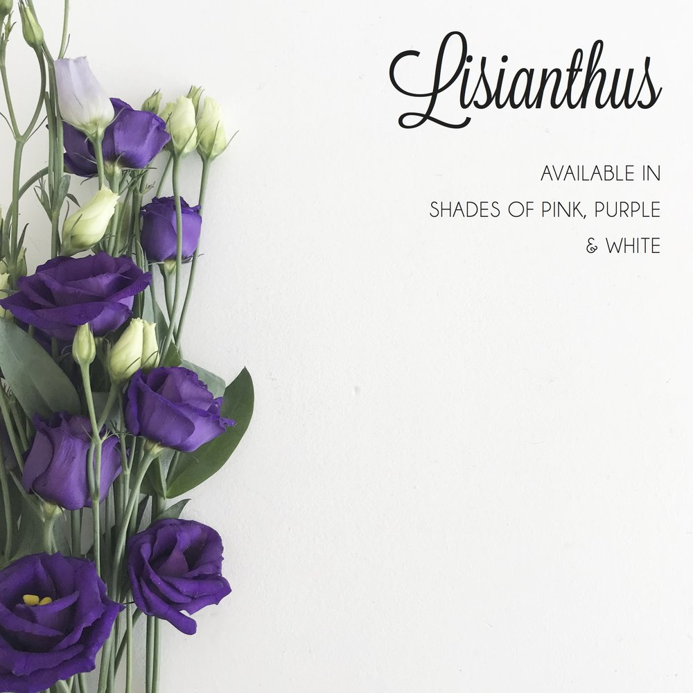 FLORAL-lisianthus.jpg