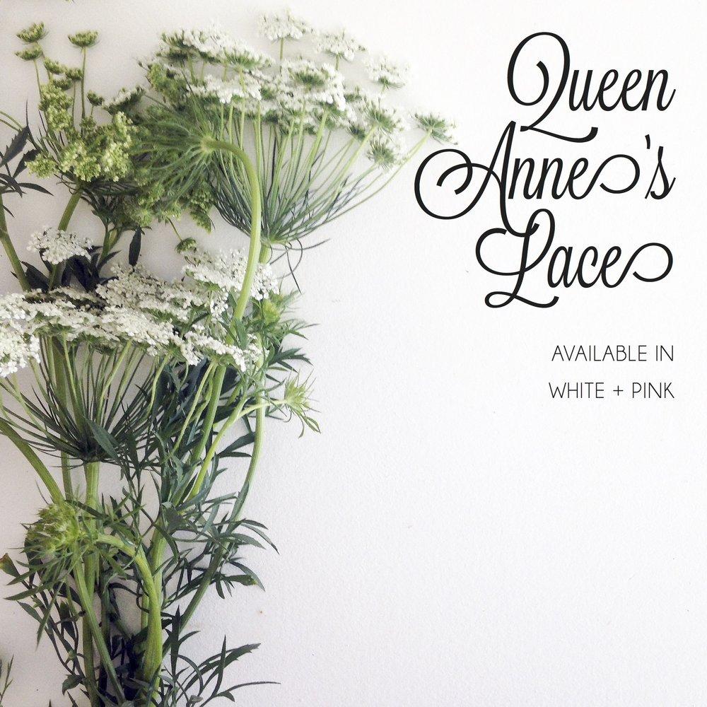 FLORAL-queen annes lace.jpg
