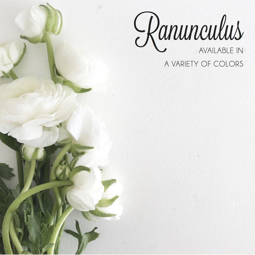 FLORAL-Ranunculus.jpg