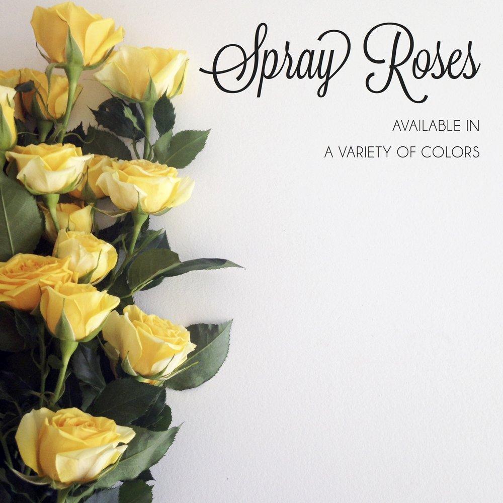 FLORAL-spray roses2.jpg