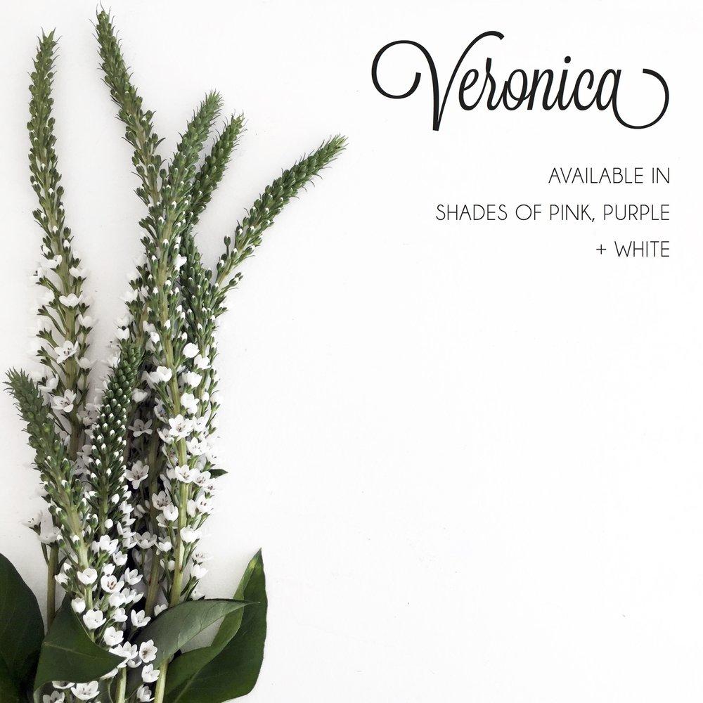 FLORAL-Veronica.jpg